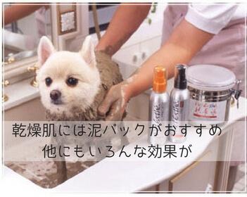 ペットの乾燥毛対策