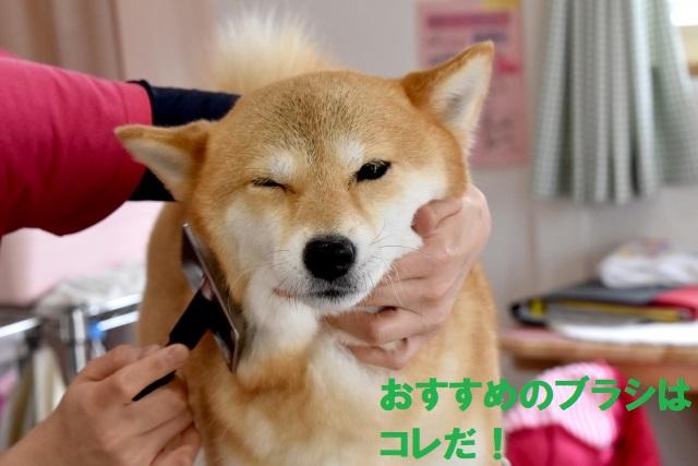 犬におすすめブラッシング